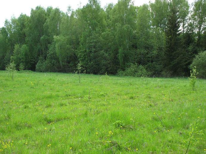 Дооформить земельный участок можно будет до 2017 года