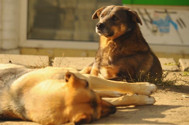 В Севастополе неизвестные массово травят собак