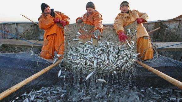 Только треть рыбодобывающих предприятий Крыма оформила разрешения на вылов