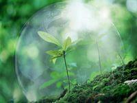 На охрану окружающей среды выделено 702 млн. рублей