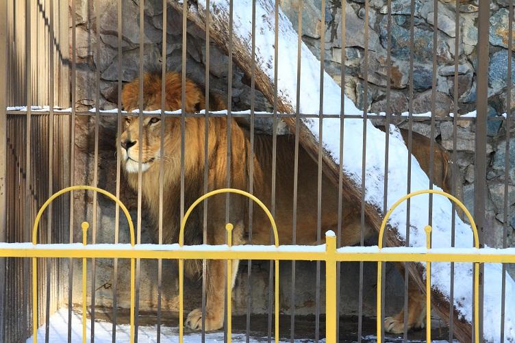 В Детском парке в Симферополе обновят вольер для львов