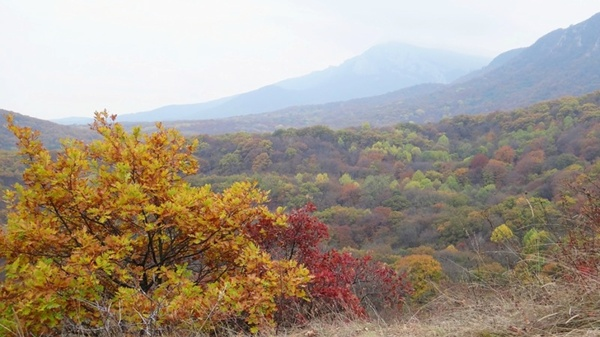 Севастополь вернул 0,6 гектаров земель лесного фонда