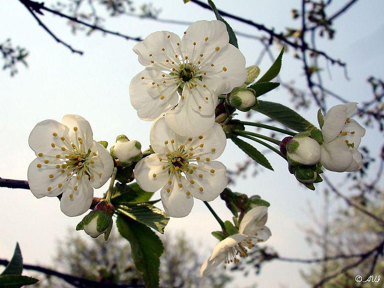 В Крыму высадили первые деревья в саду-чаир