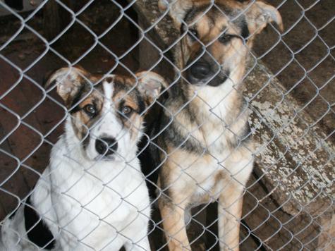В Евпатории хотят построить питомник для животных