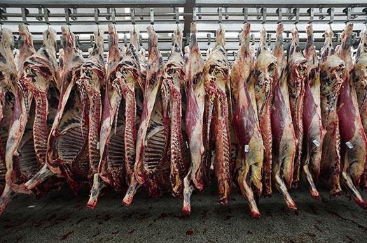 В Крыму появятся специализированные пункты по убою скота