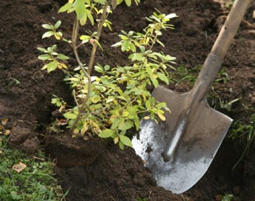 Крымские экологические организации примут участие в высадке деревьев в «Лесу Победы»