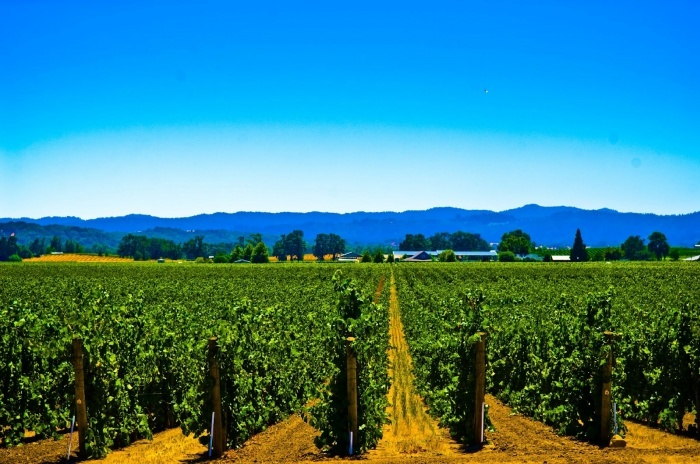 Винодельческие предприятия Крыма не могут провести модернизацию производства из-за нехватки средств