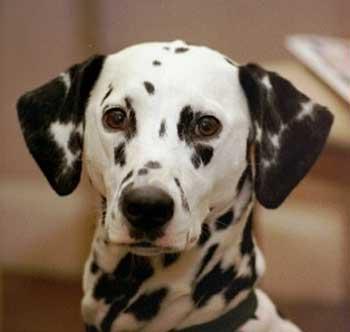 Жительница Севастополя пыталась покончить с собой из-за пропавшей собаки