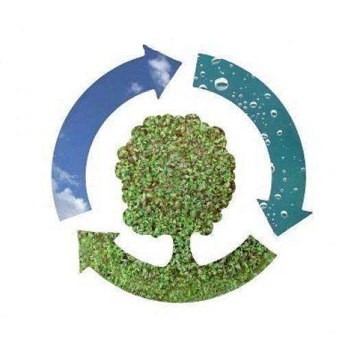 Крым готов перерабатывать биологические отходы
