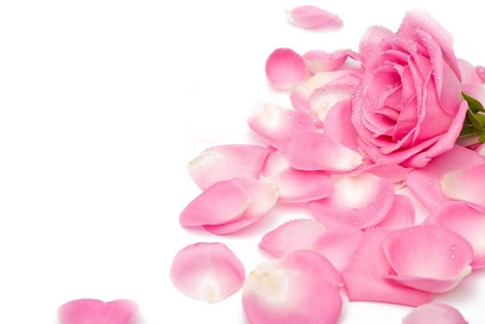 В Алуште вновь будут собирать лепестки роз