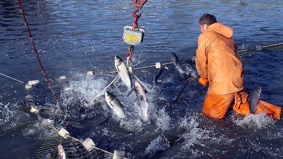 Крым хочет самостоятельно формировать правовые акты в области рыболовства