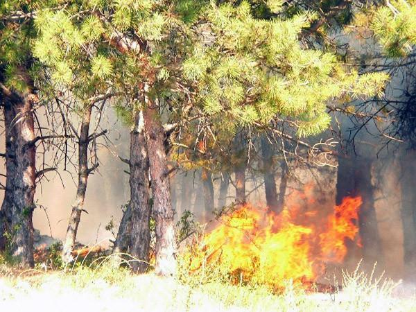 Обеспечение пожарной безопасности в лесах Севастополя обойдется в 12 млн. рублей