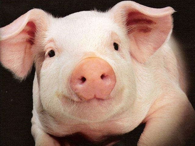 Украина опять пыталась поставить в Крым недоброкачественную свинину