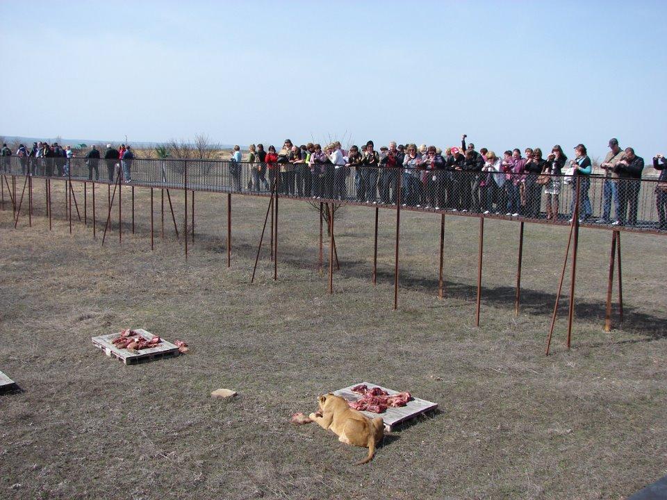 Руководство «Тайгана» ответит за травмированного ребенка