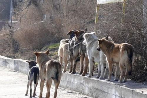 В Феодосии намерены заняться отловом бродячих собак