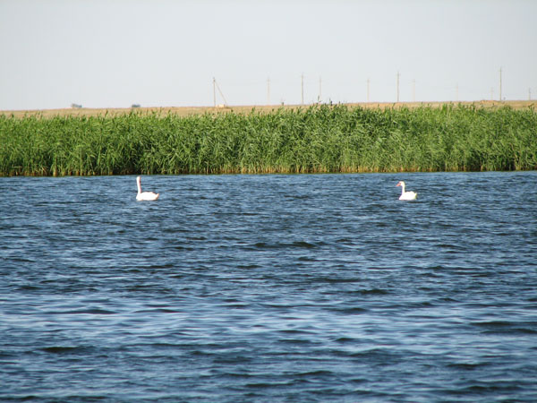 Сельскохозяйственные земли в степной зоне Крыма будут орошать водой из прудов
