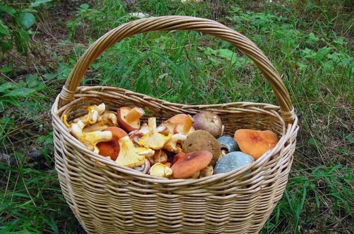 В Крыму заблудились четыре грибника