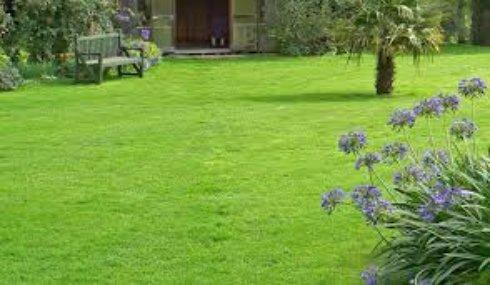 Как выбрать траву для газона?