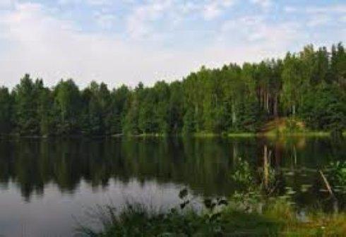Отдых в лесу или на море?