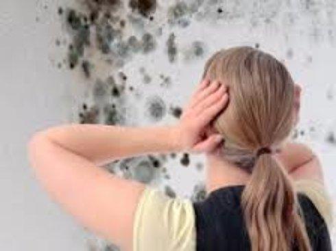 Борьба с грибком и плесенью