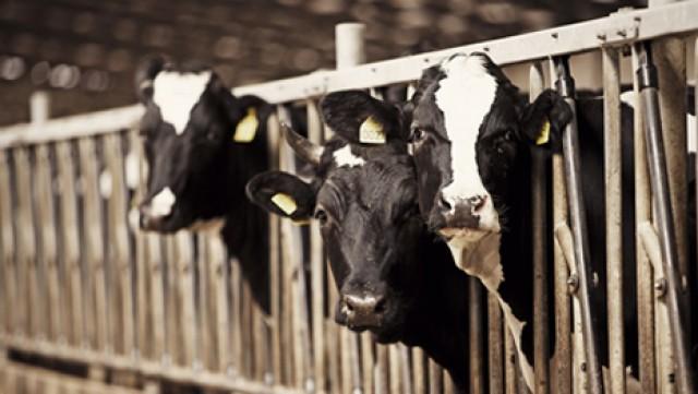 Правительство обещает поддерживать молочные фермы в Крыму