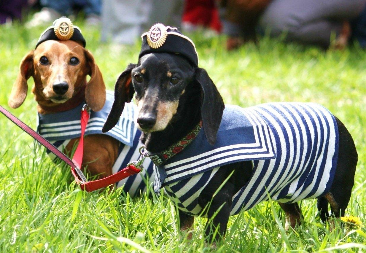В Феодосии впервые состоится парад собак