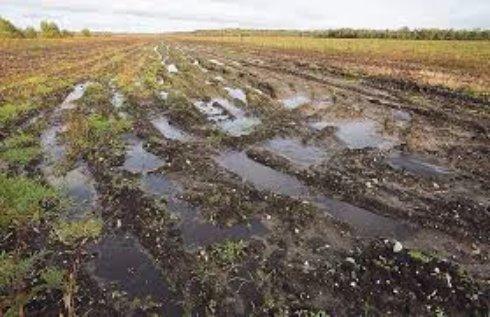 Решение проблемы загрязненности почвы камнями на Крымских полях