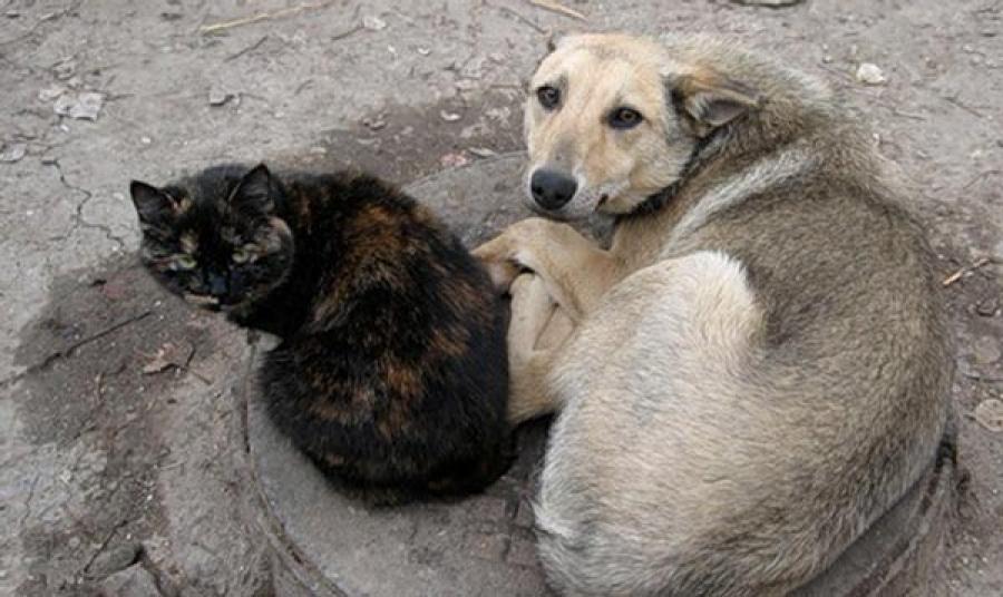 В Симферополе будут защищать бездомных животных