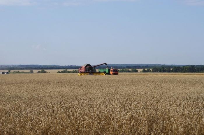 Крым намерен экспортировать часть урожая в Иран