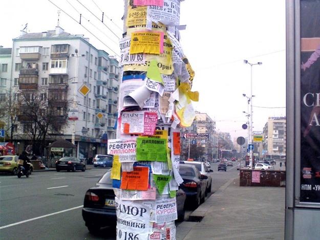 Студенты из Нижегородской области будут бороться с рекламой на столбах в Ялте