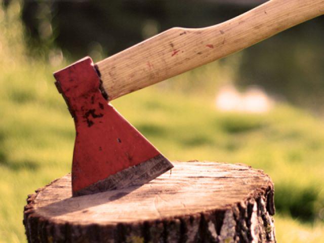 В Алуште расследуют незаконную вырубку 159 деревьев
