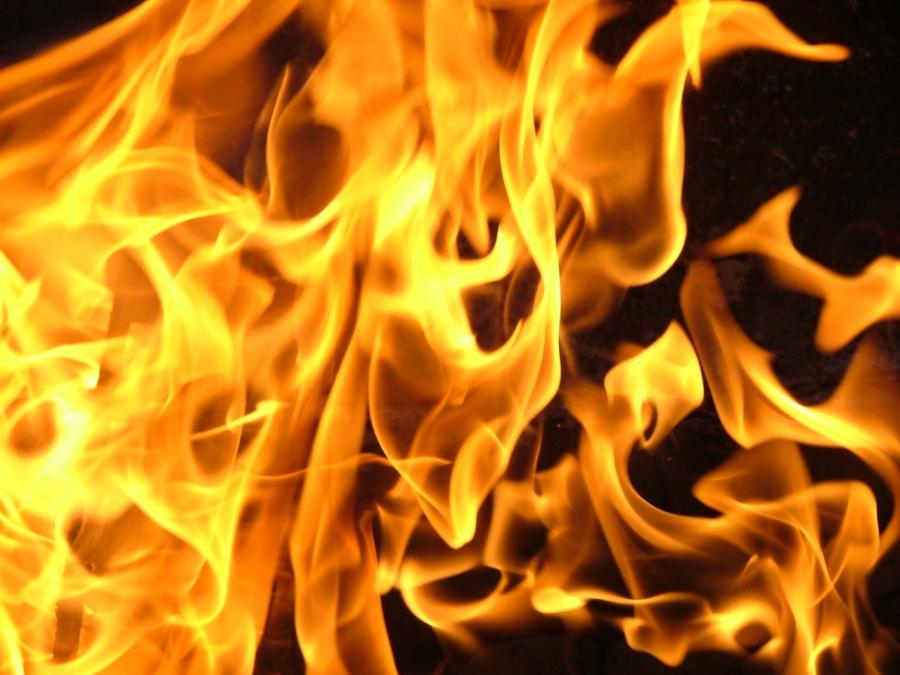 За прошедшую неделю леса в Севастополе горели 12 раз