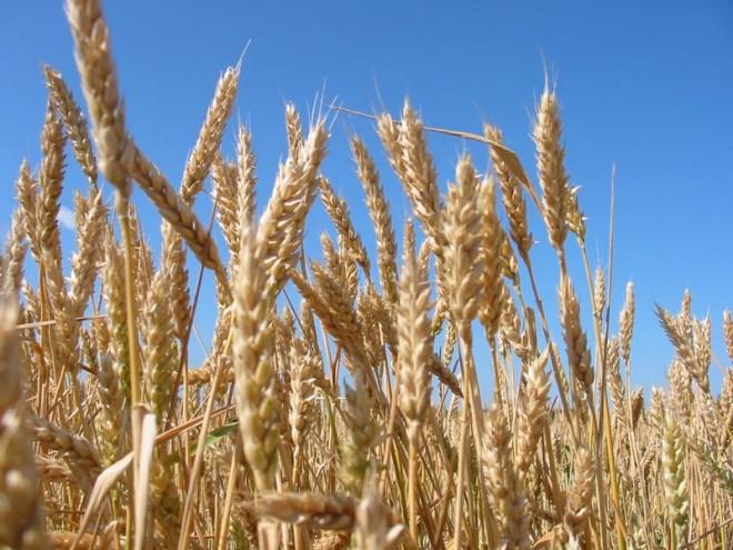 Крымские власти советуют развивать в Поповке сельское хозяйство, а не заниматься организацией фестивалей