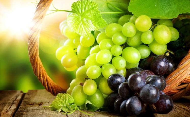 В Бахчисарайском районе в августе пройдет фестиваль «Золотая гроздь»