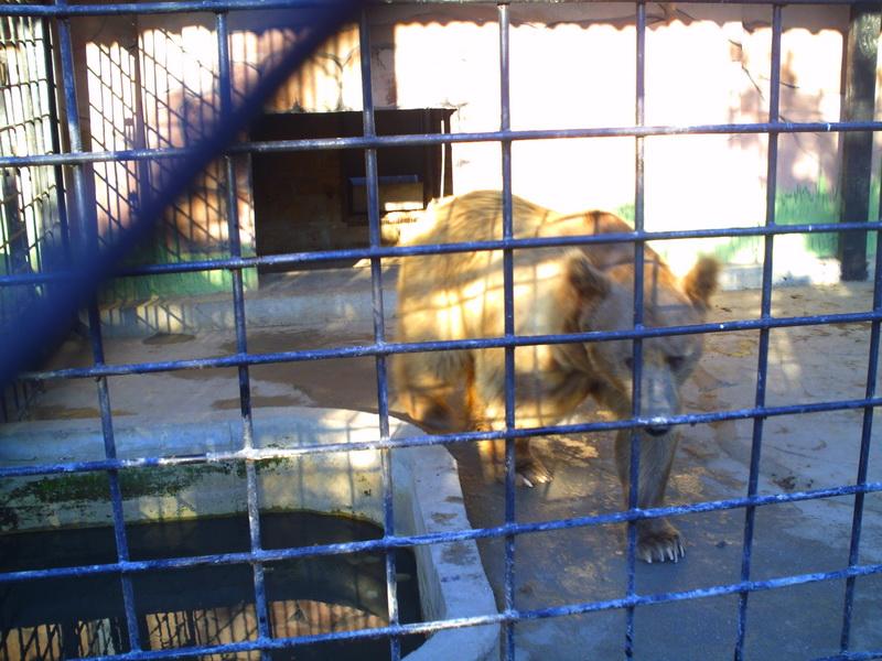 В Евпатории появится зоопарк