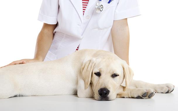 Стерилизовать собак в Феодосии будут за деньги чиновников