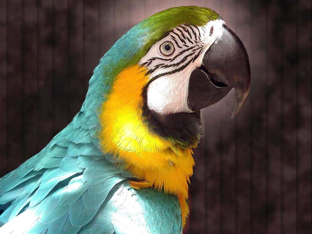 Жителю Крыма грозит крупный штраф за использование попугая Ара