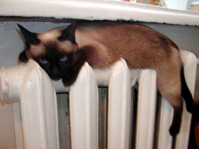 Севастополь не готов встречать холода