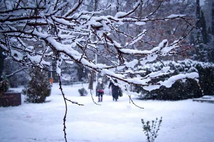 Стало известно о планах россиян на предстоящие новогодние выходные: Крыма в списке нет
