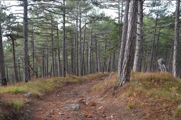 Попасть в крымские леса нельзя будет до конца сентября