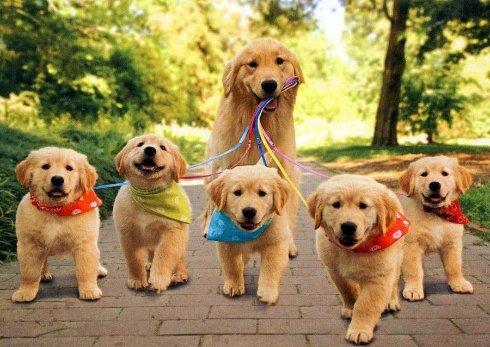 Наши стареющие, но такие любимые собаки