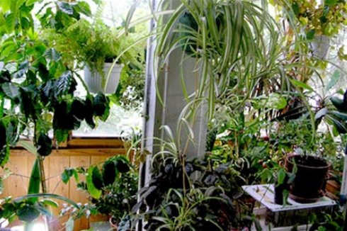 Обустраиваем зимний сад