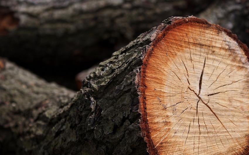Депутат возмущен уничтожением деревьев в Симферополе