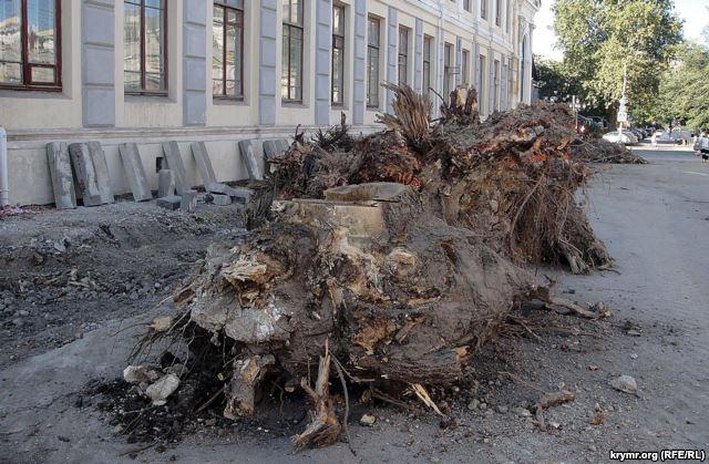 Симферополь оставляют без деревьев ради парковки
