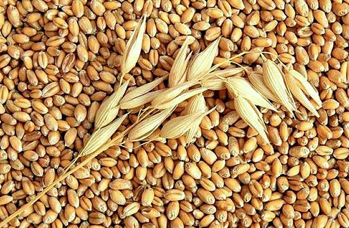 В Керчи предприниматели перевозили зерно без сопроводительных документов