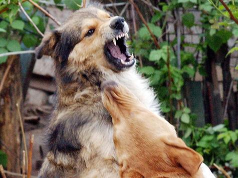 В Керчи служебные собаки напали на женщину с ребенком