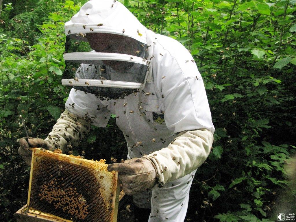 В Севастополе пчеловоду предоставили 1,5 миллиона на развитие бизнеса