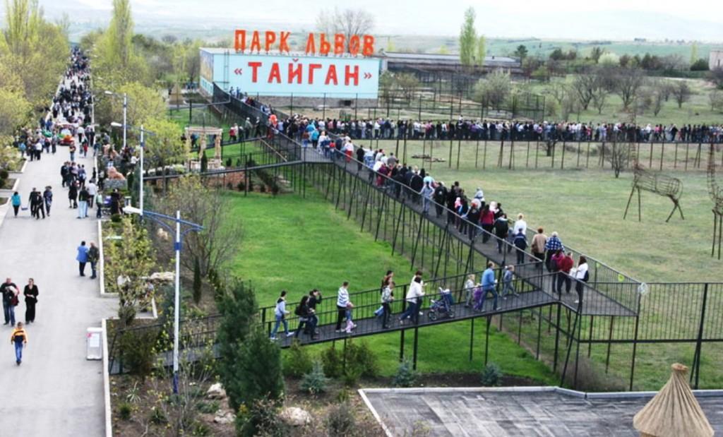 В «Тайгане» появится памятник умершему вожаку прайда
