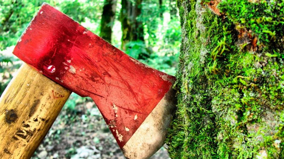 Севастополец проведет в тюрьме больше двух лет за рубку деревьев