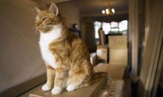 Как перевезти кошку в новую квартиру